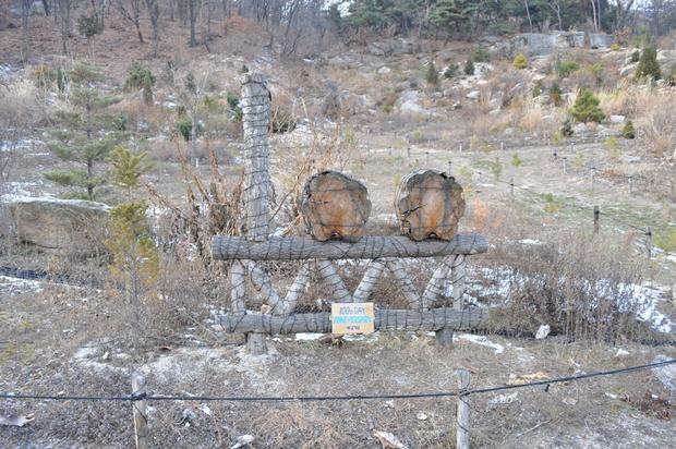 100일 기념 나무 조형물