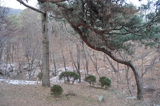 연인나무의 모습