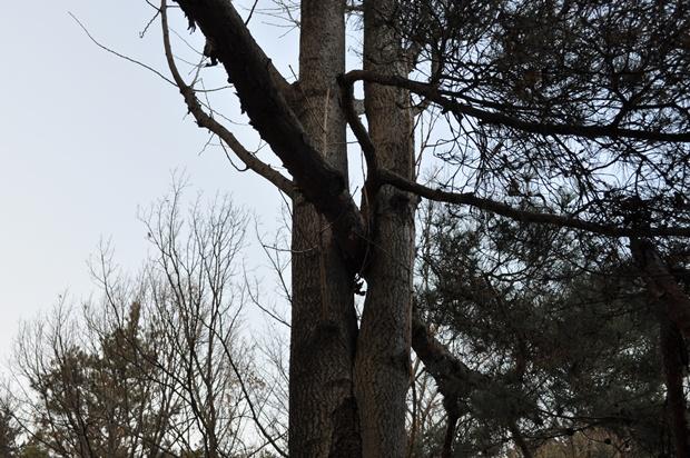 나무가 서로 크로스 된 모습
