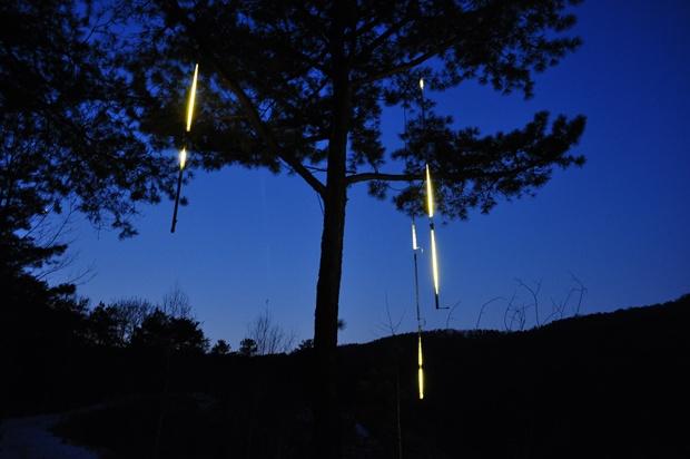 나무에 켜진 불빛