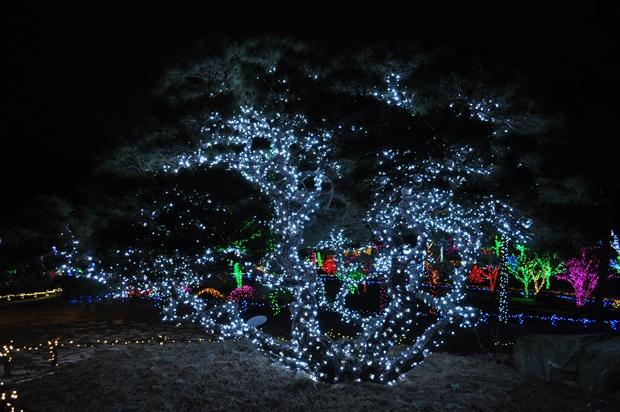 빛나는 나무의 모습