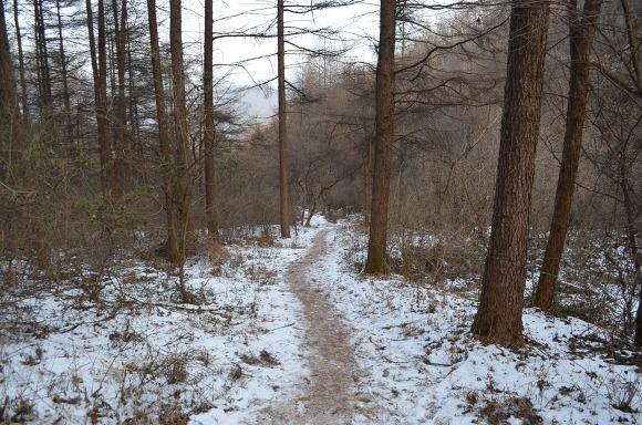 눈이 쌓인 숲길의 모습