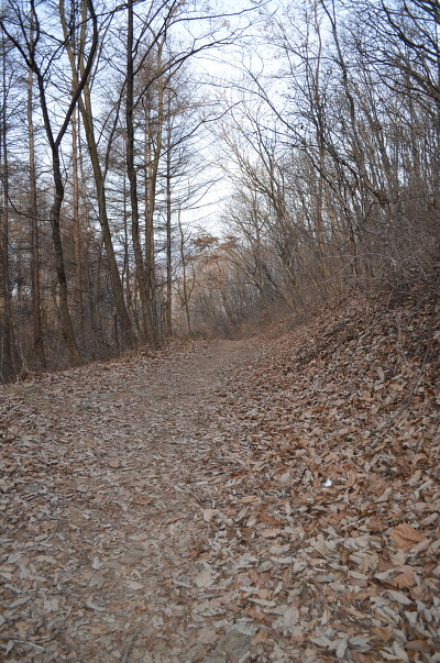낙엽이 쌓인 숲길의 모습