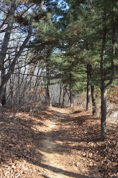 숲길의 모습