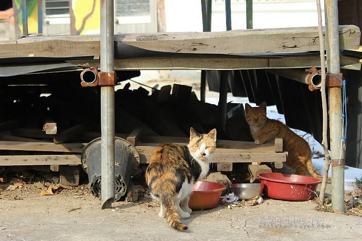 고양이들의 모습