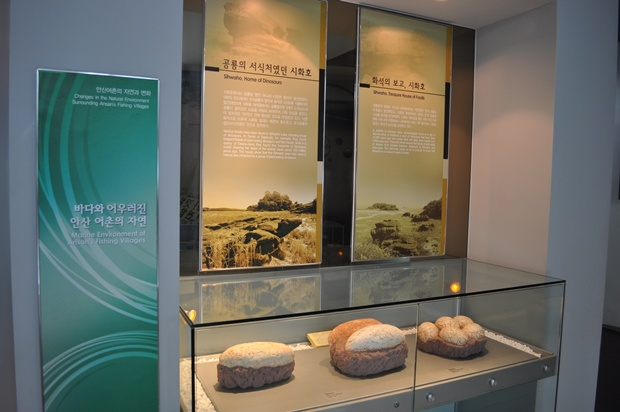 시화호에 대한 설명과 공룡알 화석