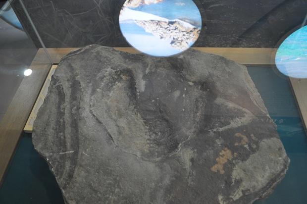 공룡의 발자국 화석