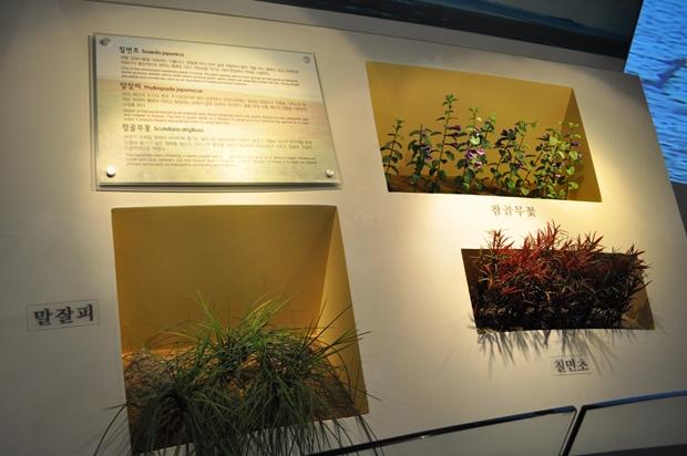 말잘피, 칠면초, 참골무꽃의 모습