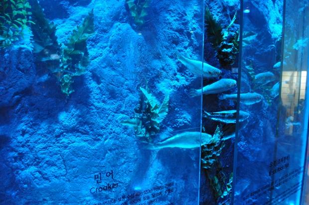 물고기 모형들