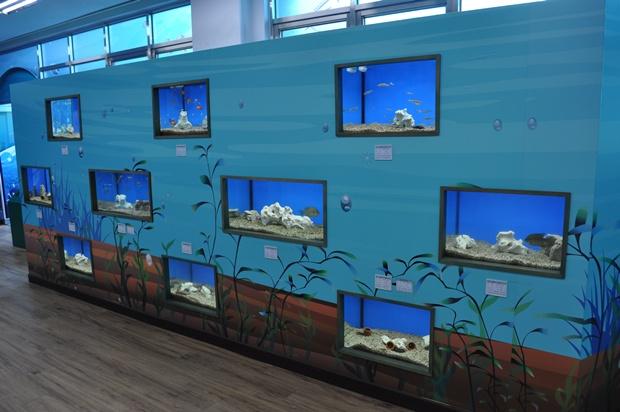수족관의 물고기들