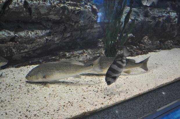 수족관 안에 바다물고기들의 모습