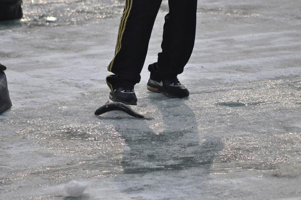 얼음 위에 물고기의 모습