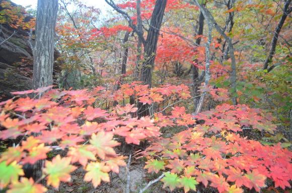 단풍나무와 단풍잎