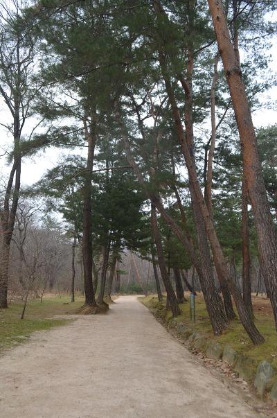 길 양옆에 나 있는 높은 나무들