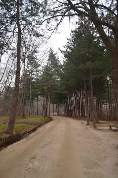 양옆에 높은 나무들이 서 있는 오솔길