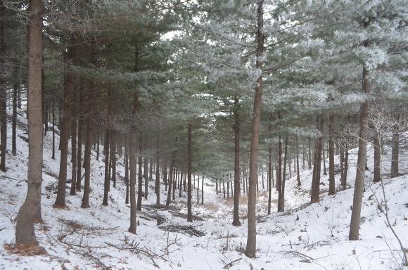 나무가 우거진 숲의 모습