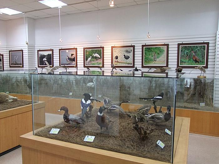 다양한 조류의 사진과 모형들이 전시되어 있는 모습