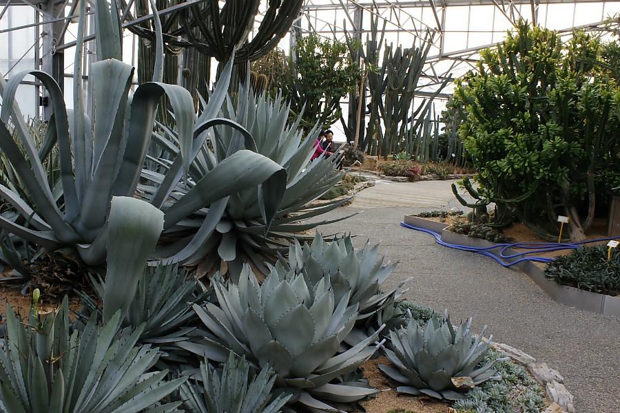 식물원내 여러 다육식물의 모습