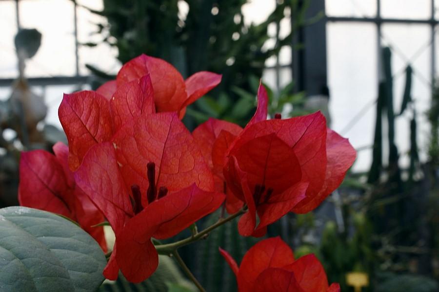 붉은 선인장의 꽃의 모습