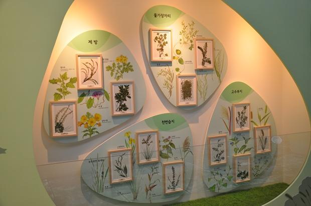 안양천에서 자라는 식물들을 전시하고 있는 모습