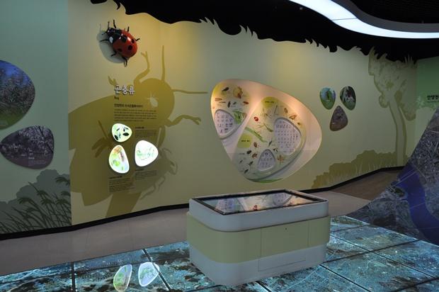 안양천에 서식하는 곤충들이 전시되어 있는 모습