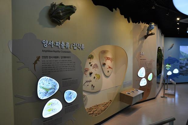 안양천의 양서류 파충류 갑각류에 대한 전시공간