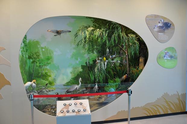 안양천의 조류에 대한 전시공간의 모습