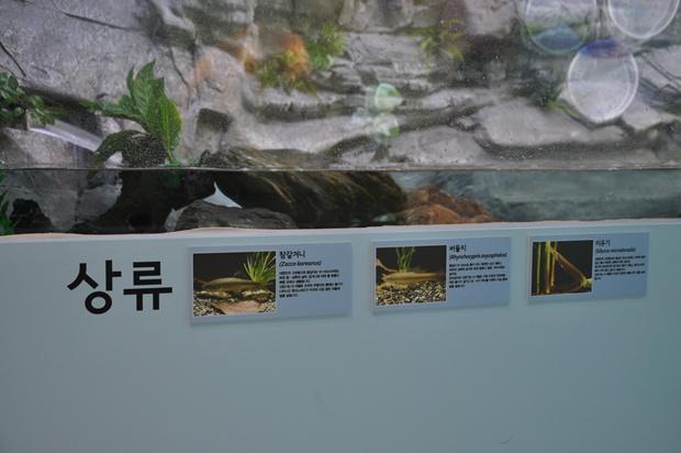 안양천 상류에 사는 어류에 대한 사진과 설명글의 모습