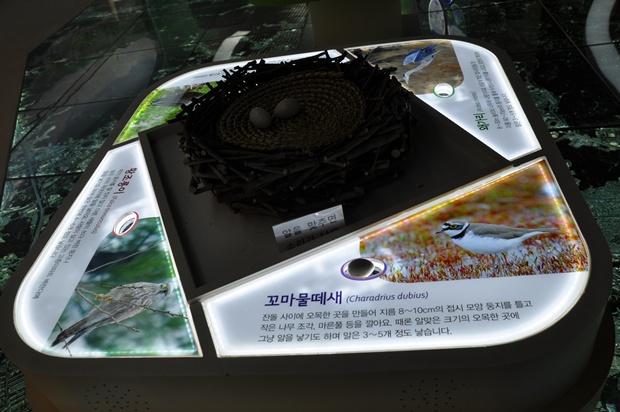 안양천의 다양한 조류에 대한 사진 및 설명과 그 가운데 놓여 있는 모형 둥지와 알