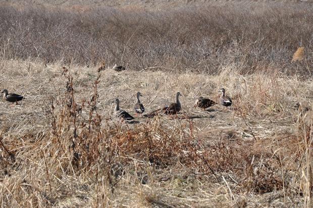 철새들의 모습