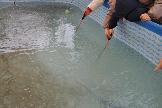 수조에 담긴 빙어를 뜰채로 잡는 모습