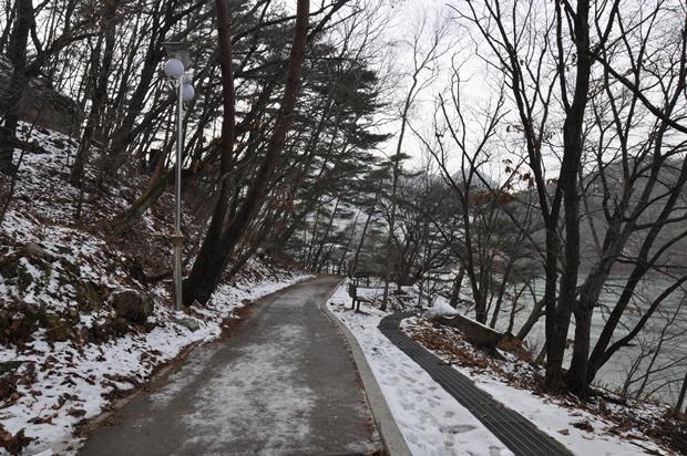 앙상한 나무가 우거져 있는 산책로의 모습