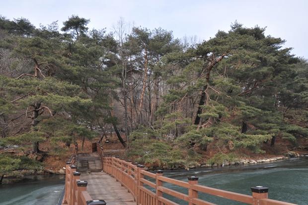 나무가 우거져 있는 숲으로 이어지는 다리