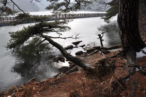 호숫가로 쓰러져 있는 듯한 나무