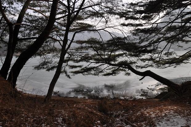 나무들 사이로 보이는 호수의 모습