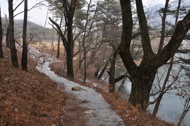 얼음이 얼려 있는 숲길