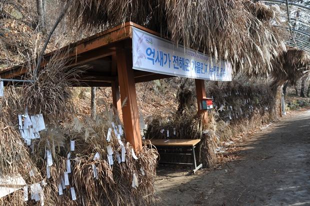 명성산 억새꽃 축제가 열렸던 장소와 억새꽃에 매달려 있는 쪽지의 모습