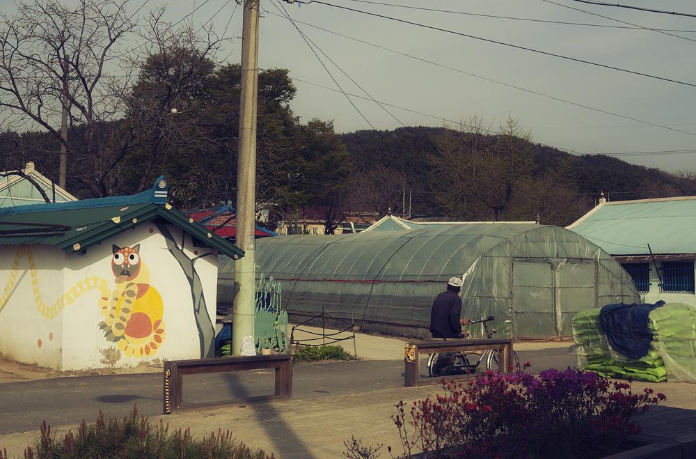 호랑이 모양의 벽화가 그려져 있는 건물과 비닐하우스가 있는 풍경