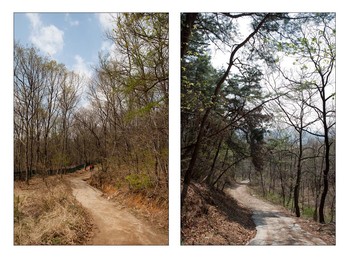 양옆으로 높은 나무들이 서 있는 산길의 모습, 오솔길의 모습