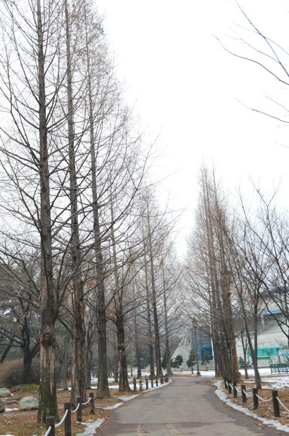 높은 나무 사이로 난 산책로