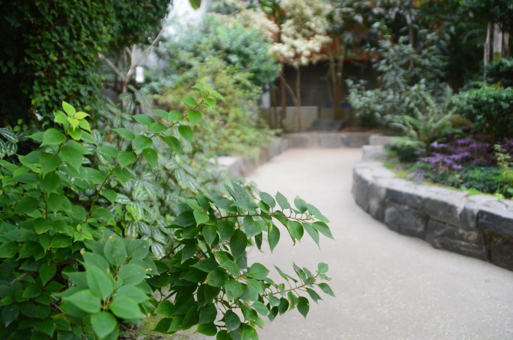 다양한 식물들이 전시되어 있는 모습