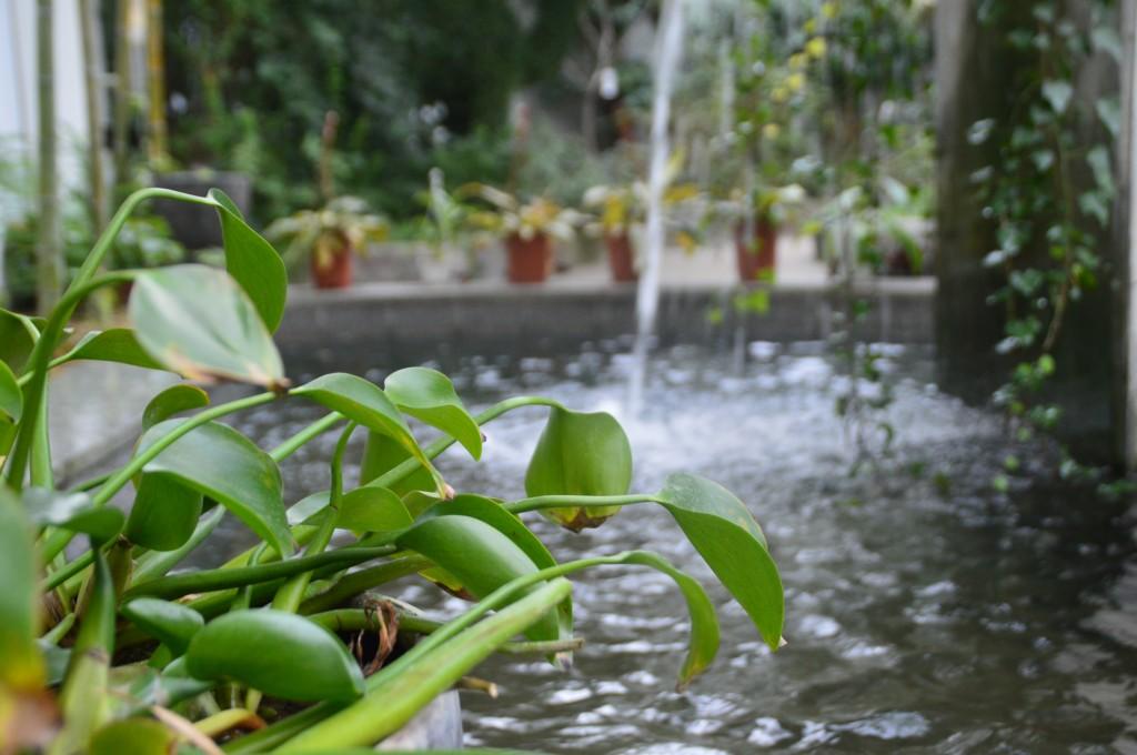인공 폭포와 그 주위에 놓여 있는 여러 식물들