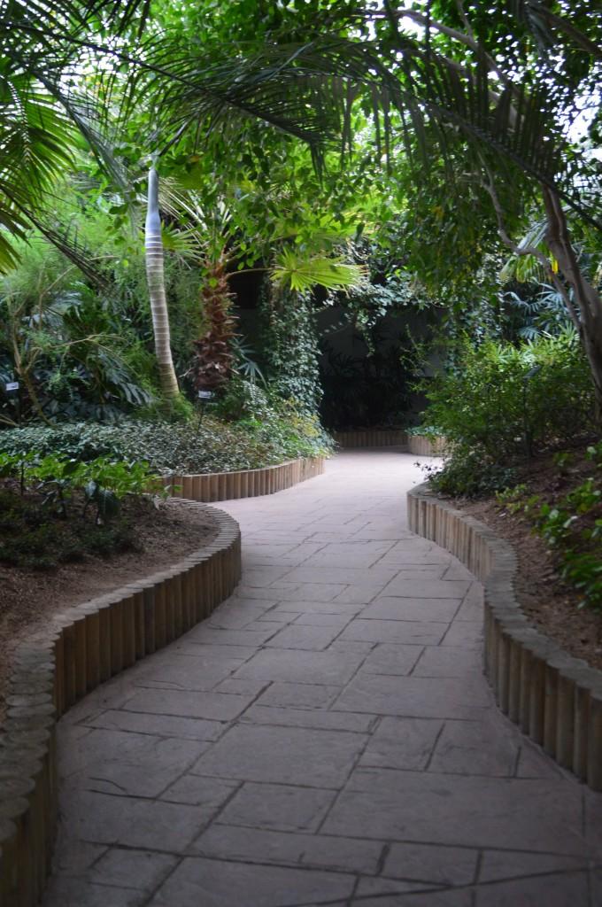 온갖 식물들로 둘러쌓여 있는 식물원 내 길의 모습