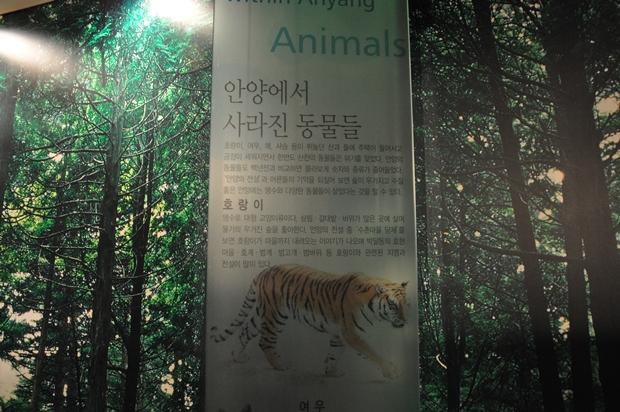 안양에도 호랑이가 살았다는 사실을 설명하고 있는 판넬의 모습