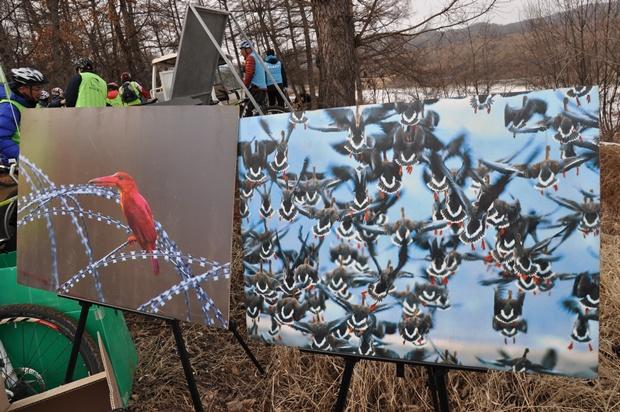 비무장지대에 서식하고 있는 새들의 사진