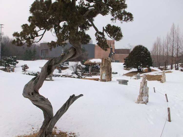 신기한 모양의 나무