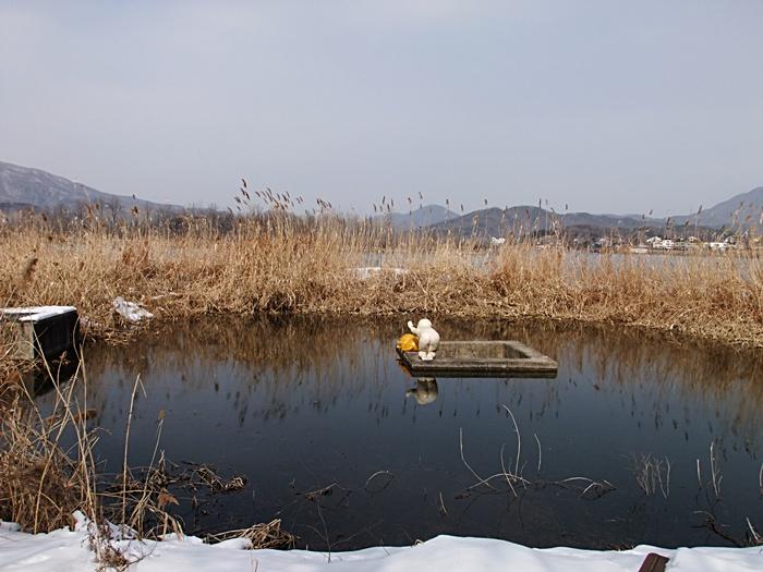갈대로 둘러싸인 연못의 모습