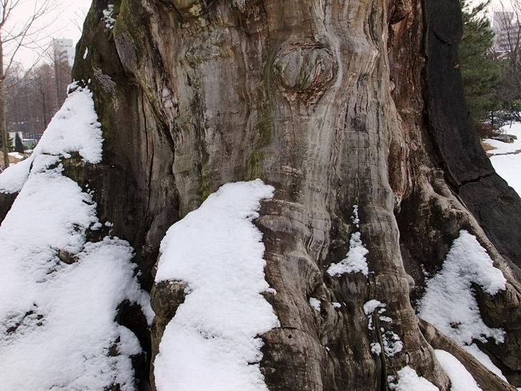 나무 아래로 쌓인 눈