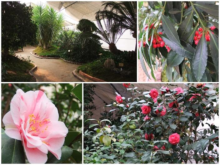 온실 안에 꽃과 나무들