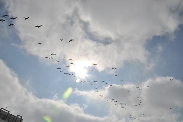 태양과 함께 찍힌 개리떼